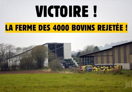 victoire 4000 bovins