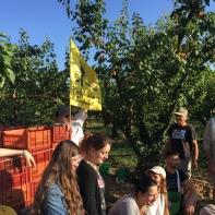 Ramassage abricots 4 - GLUN - 16 Juillet 2019