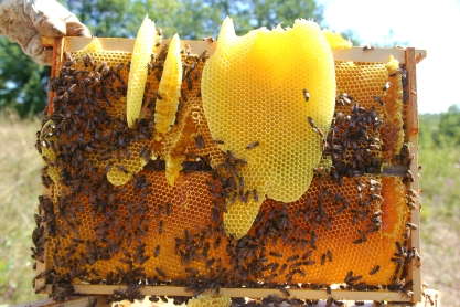 Cire_d'abeille.jpg